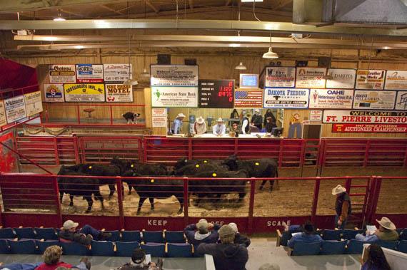 Livestock Auction
