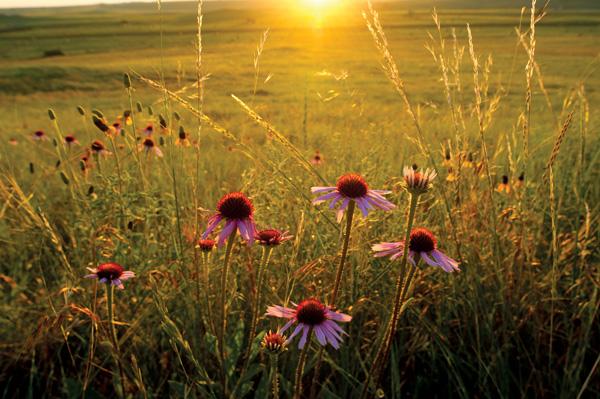 Saving Our Native Prairie