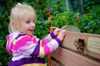 Two-year-old Shelby encounters an Owl butterfly.