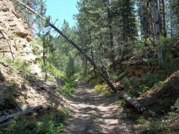 The old rail bed trail.
