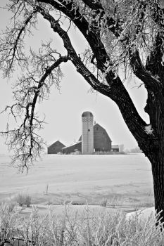 Another McCook County farm scene framed by Jack Frost's handiwork.
