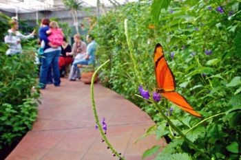 A Julia butterfly feeding while visitors relax on viewing bench.