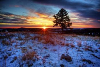 Sunrise behind a lone ponderosa pine in Custer State Park.