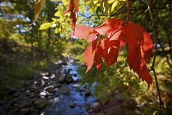 Autumn color along Grace Coolidge Creek.