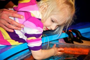 Shelby wasn't afraid to touch a small shark in the Marine Cove's touch pool.