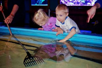 Bo and Shelby checking out the sting rays in the touch pool.