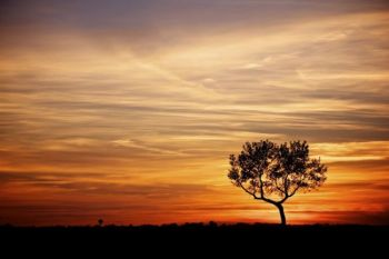 A lone tree at sunset near Skunk Creek just east of Hartford, SD. Click to enlarge photos.