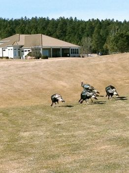 Local turkeys also enjoy Red Rock's course.