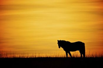 Lone horse at sunset in McCook County.