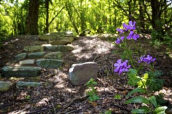 Purple rockets and a stone stairway mark the way to a hiking trail.