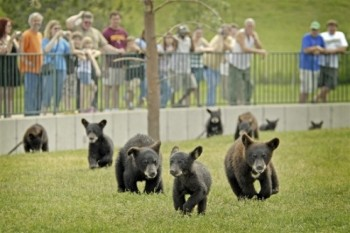 Cubs frolic at Bear Country USA. Photo courtesy of South Dakota Department of Tourism.