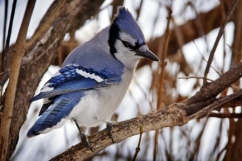 A bush or tree near a bird feeder will allow the birds a place to rest when they aren't feeding.