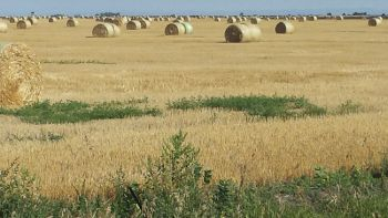 Bales in the wild.