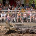 Seeing crocodiles, alligators and other wild beasts in action is part of the fun at Reptile Gardens. Photo by Chad Coppess of South Dakota Tourism. Click to enlarge photos.