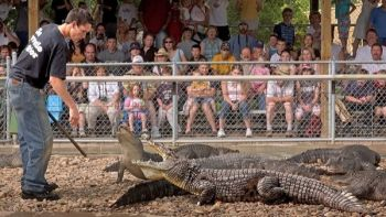 Seeing crocodiles, alligators and other wild beasts in action is part of the fun at Reptile Gardens. Photo by <a href='http://www.dakotagraph.com' target='_blank'>Chad Coppess</a> of South Dakota Tourism. Click to enlarge photos.