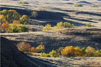 Fall colors and deer grazing in Sage Creek Wilderness.