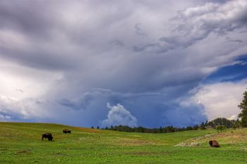Another storm brewing over a few bull bison at Custer State Park.