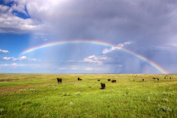 A bit further south, a rainbow appeared over a small herd of cattle grazing near the Moreau River.