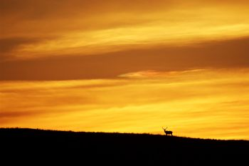 Silhouetted elk at sunset in Wind Cave National Park.
