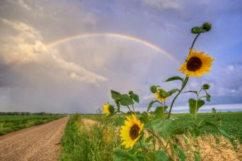 A rainbow and sunflowers not far from Twin Brooks.
