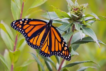 Monarch in Deuel County.