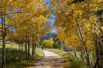 The Mickelson Trail near Englewood, bordered by aspens in their autumn splendor.