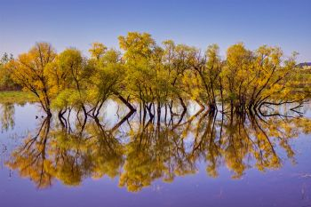Minor flooding after heavy rains in Brookings County provided a perfect reflection of this stand of trees near the Big Sioux River south of Brookings.
