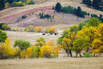 Custer State Park accented with autumn colors.