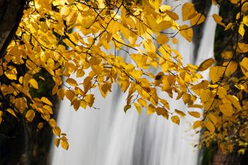 Autumn leaves at Spearfish Falls.