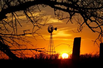 The setting sun in a tangle of barbed wire and tree branches in Turner County.