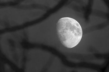 The rising moon through tree branches in Turner County.