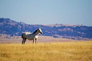 A lone horse on the Harding County prairie south of the Short Pine Hills.