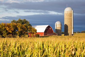 High corn and autumn accents with a McCook County barn northeast of Salem.