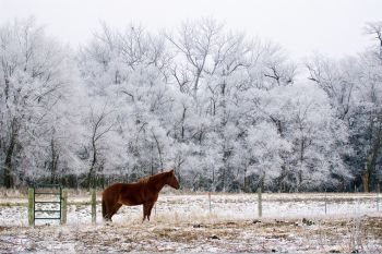 Frost just outside of Forestburg along the James River with a lone horse providing a bit of color.