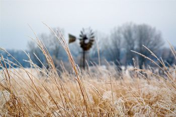 Frost on tall grass at a wildlife protection area in southern Brookings County.