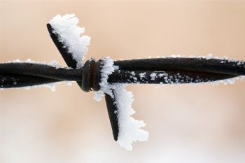 Cold and twisted barbed wire with white frost attached.