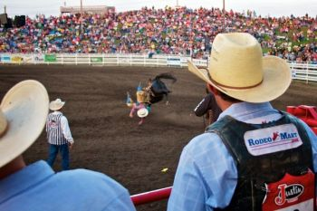Cowboys look on from the chutes as a fellow rider takes an early spill.