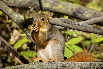 A squirrel enjoys an afternoon snack in Newton Hills State Park.