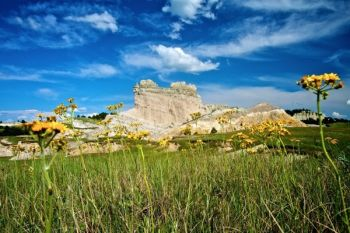 Wildflowers and a blue sky accompany the Slim Butte formations.
