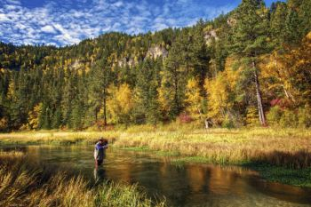 Fly fishing on Little Spearfish Creek