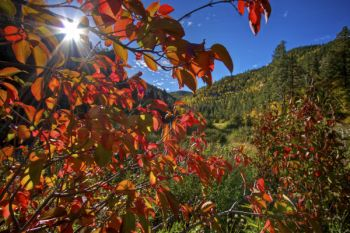 Autumn color along Little Spearfish Creek