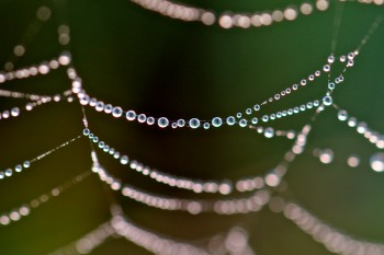 Dew on spider web. Photo by Christian Begeman.