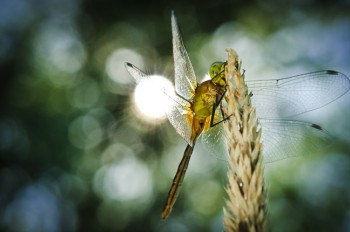 Sparkling with midday light, a dragonfly rests in the