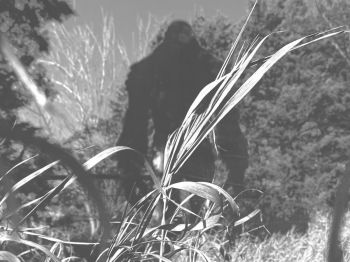 Is Sasquatch hiding out in the little mountain town of Keystone?