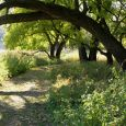 Two groomed hiking trails take visitors through areas shaded by huge oak trees and other foliage.