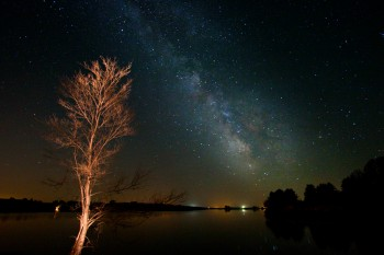 Taken at Lake Vermillion in May. I used a flashlight to light the tree.