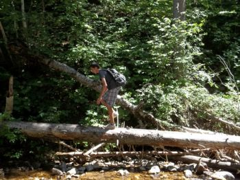 Traversing fallen logs is more fun than taking the dirt path.