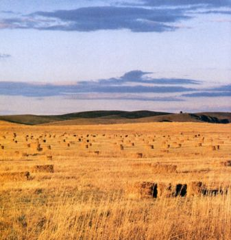 Hay bales stretch as far as the horizon on the Pine Ridge Reservation. Photo by Marianne Larsen.