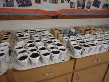 Trays of pumpkin seeds planted and ready to sprout.