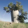 Bernie Hunhoff spotted the green ash trees sprouting from this Hutchinson County silo in 2006.